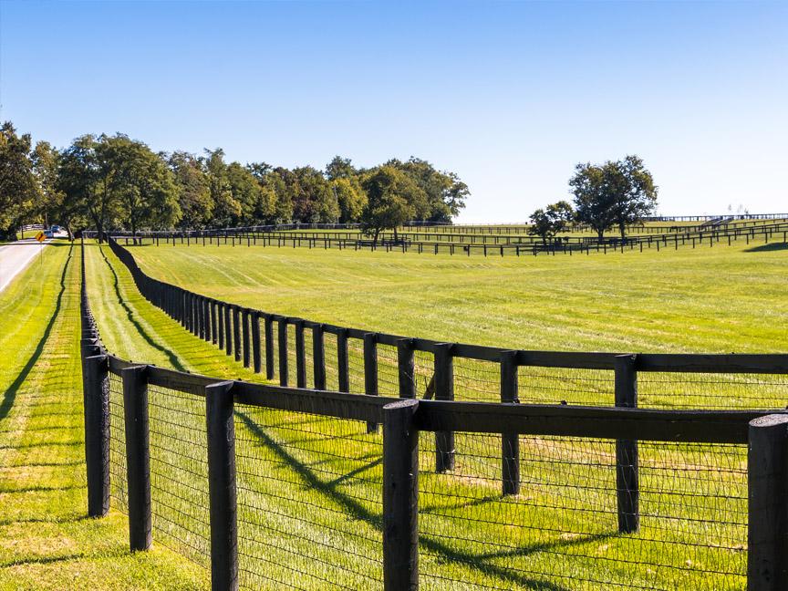 no climb wire horse fence