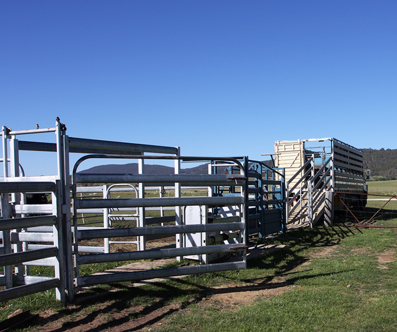 horse paddock or corral