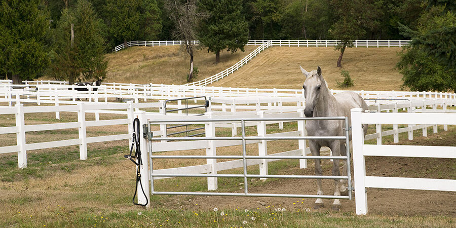 Austin TX Horse Fence Contractor